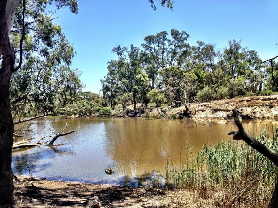 Image of the Wimmera River in the Little Desert National Park, looking across the river bank towards gum trees and bush